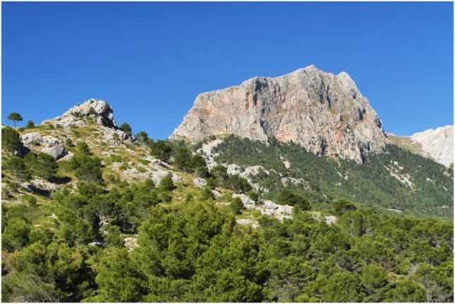 Der Gipfel des Puig Major