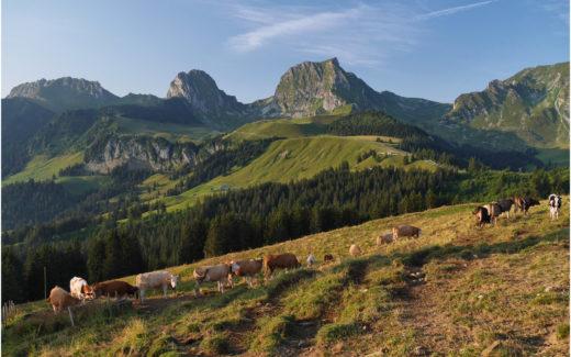 Ausblick vom Gurnigel zu den Gipfeln des Gantrischgebiets