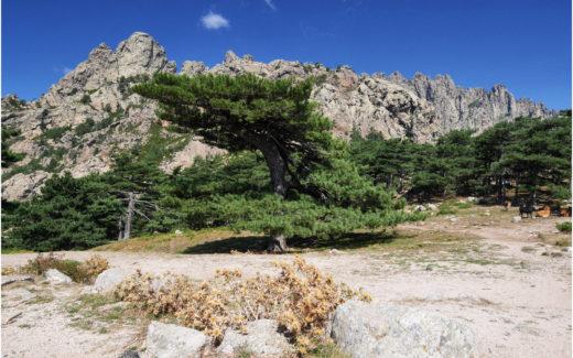 Landschaft am Col de Bavella