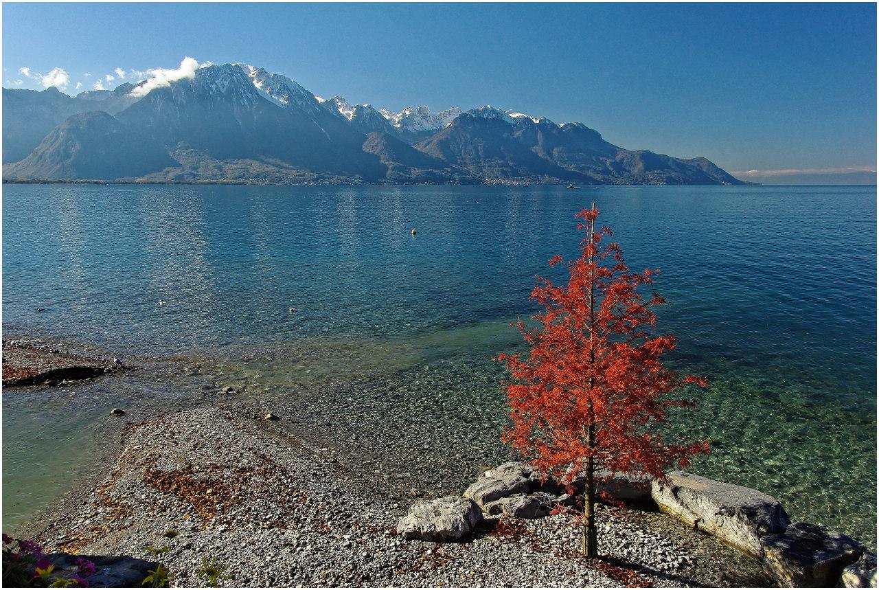 Der kleine Strand mit dem roten Baum...