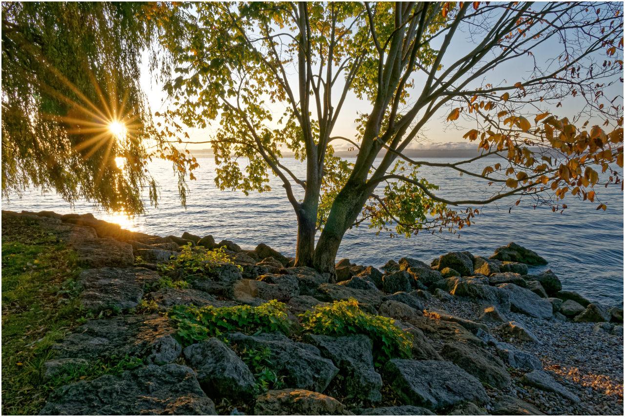 Die kurz zuvor aufgegangene Sonne lugt zwischen den Blättern einer Weide hindurch
