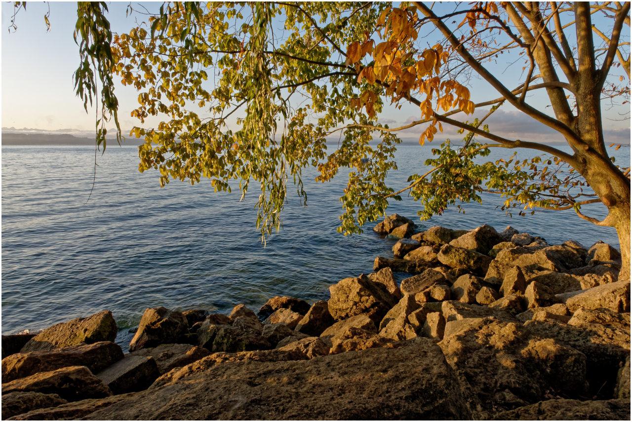 Die Färbung der Blätter weist auf den beginnenden Herbst hin...