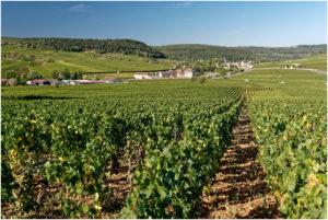 Das Burgund ist geprägt von Weinbergen und kleinen Winzerdörfern