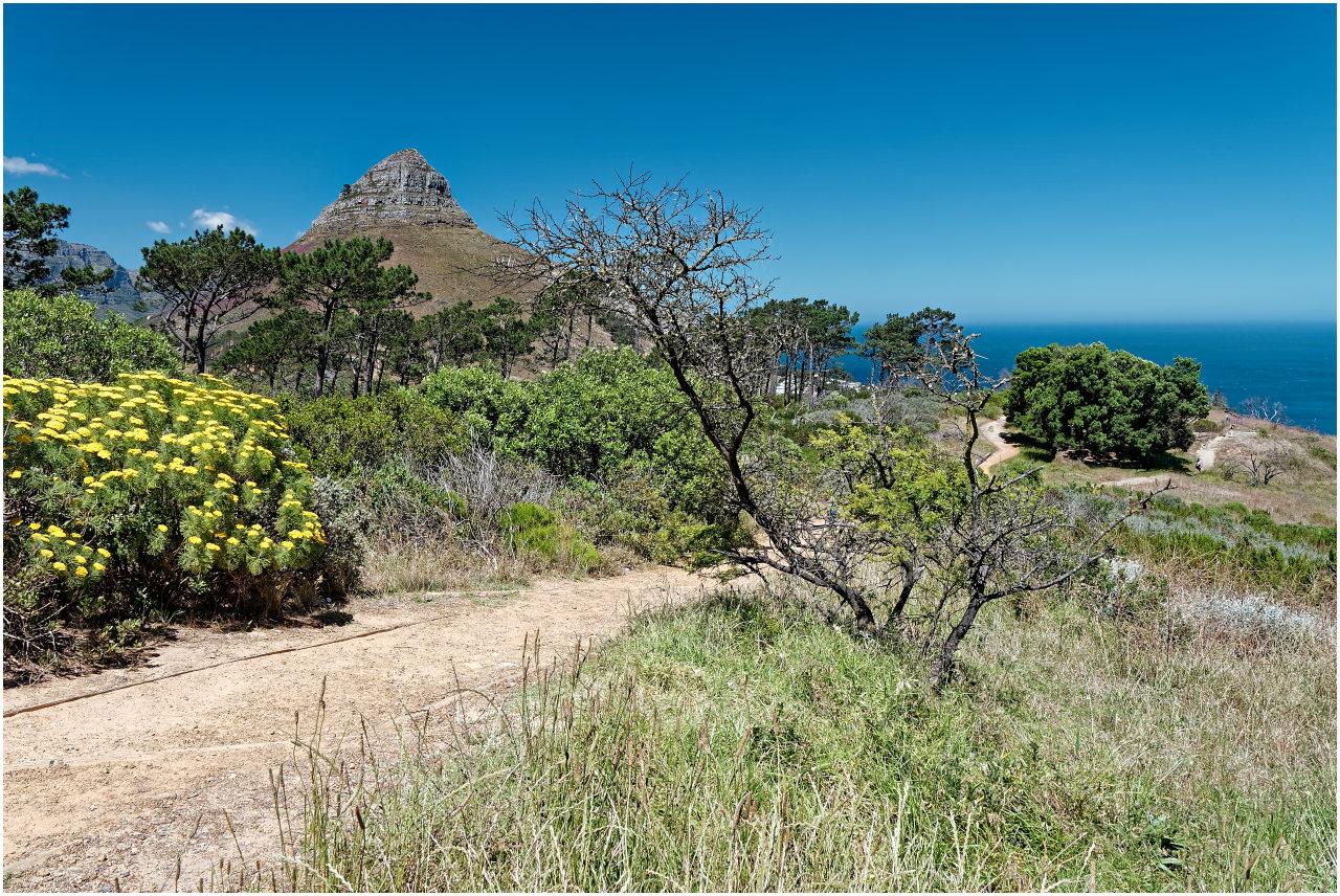 ...oder hier am Signal Hill, mit dem Blick aufs Meer und zum Lion's Head