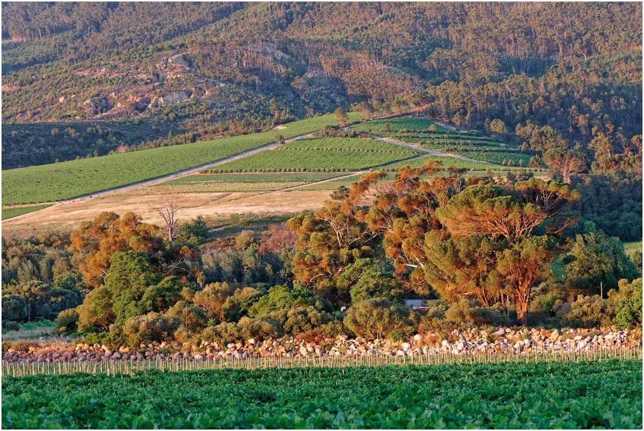 Weinberge im Bovlei Valley