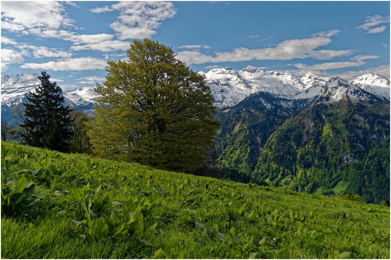 Frühlings-Panorama nahe der Ibergeregg