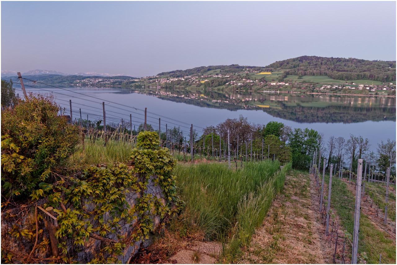 Blick von den Weinbergen bei Tennwil über den See nach Beinwil am See