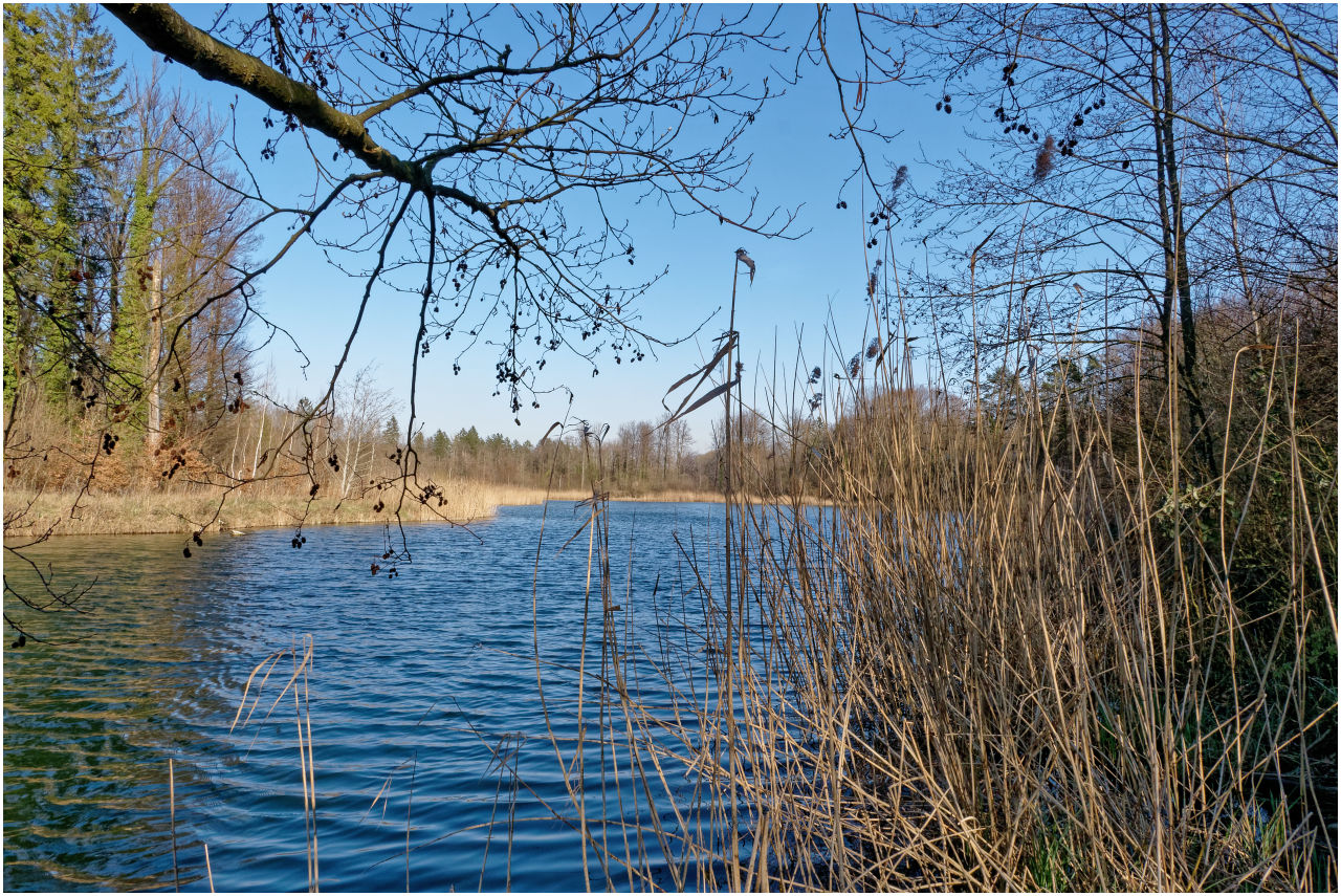 Der grosse See am alten Aarelauf im Aarschachli, vom Westufer aus gesehen