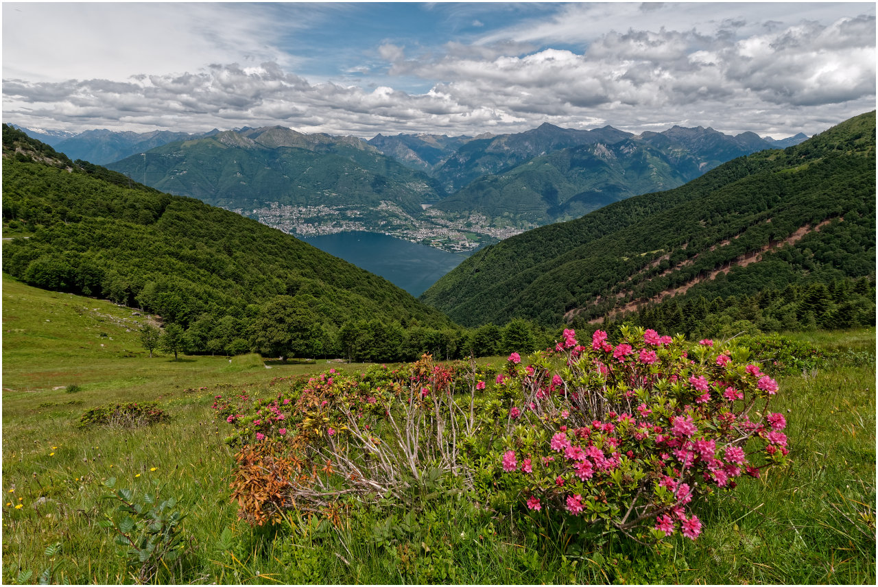 Auf der Alpe di Neggia