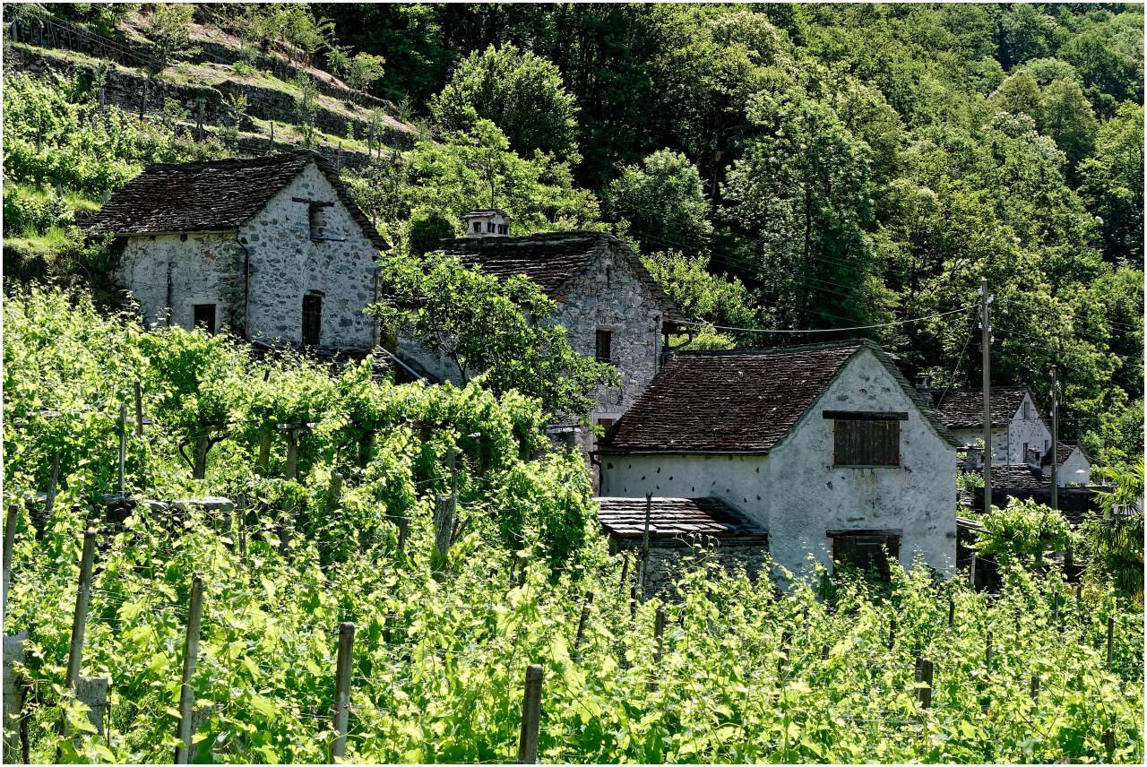 Traditionelle Winzerhäuser in Maggia