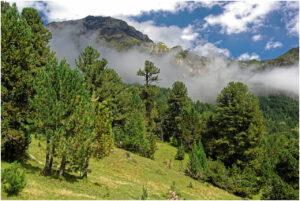 Wolken ziehen durch den Bergwald