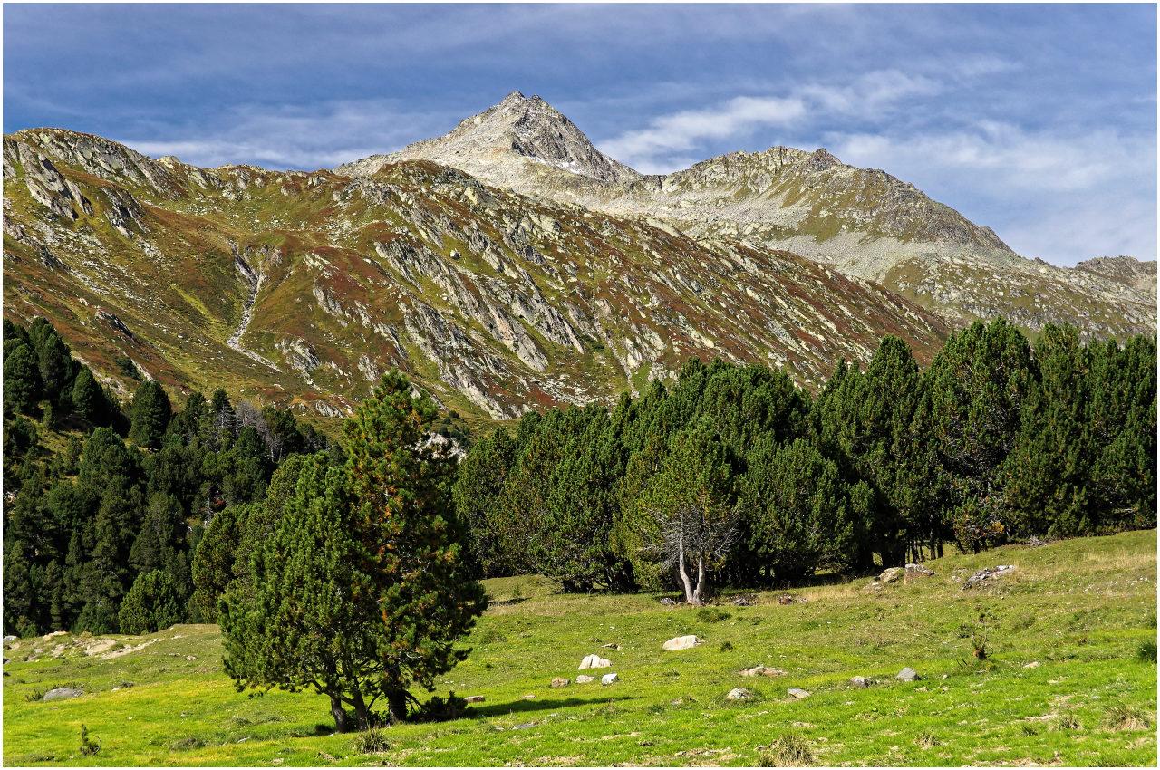 Lockerer Bergkiefern-Wald prägt die Landschaft hier an der Baumgrenze