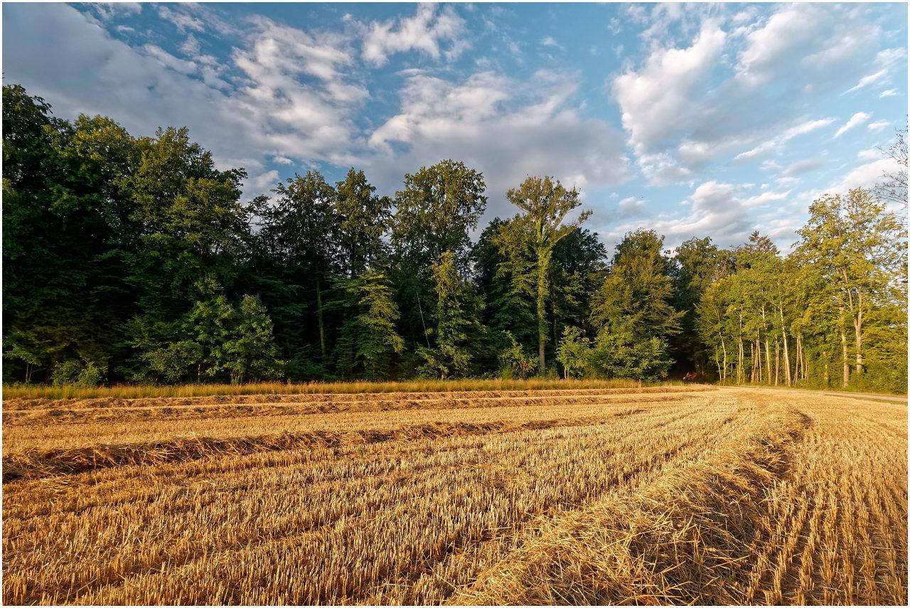Abgeerntetes Feld in der Morgensonne
