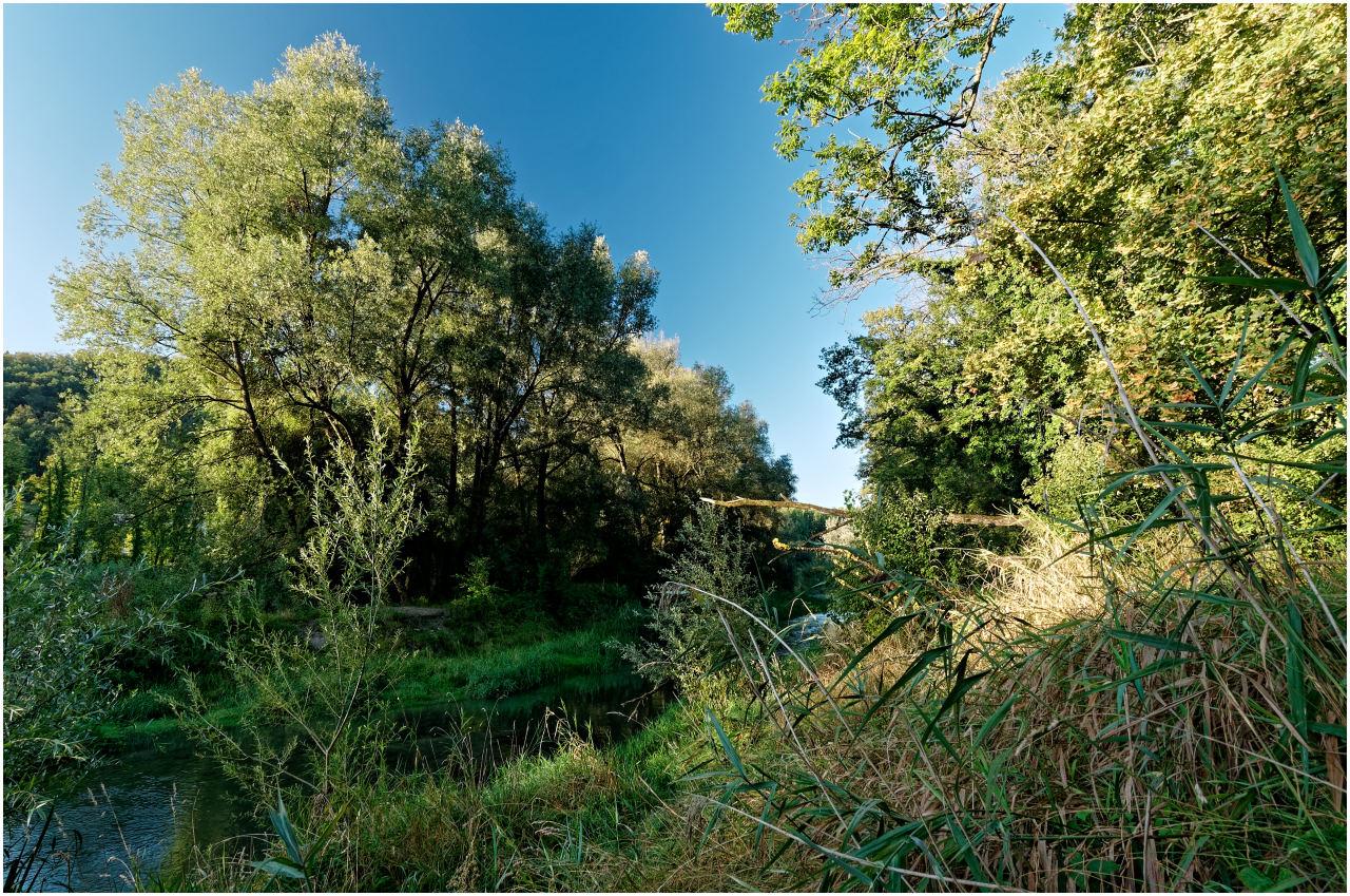 Wilder Auenwald am kleinen Nebenlauf der Aare