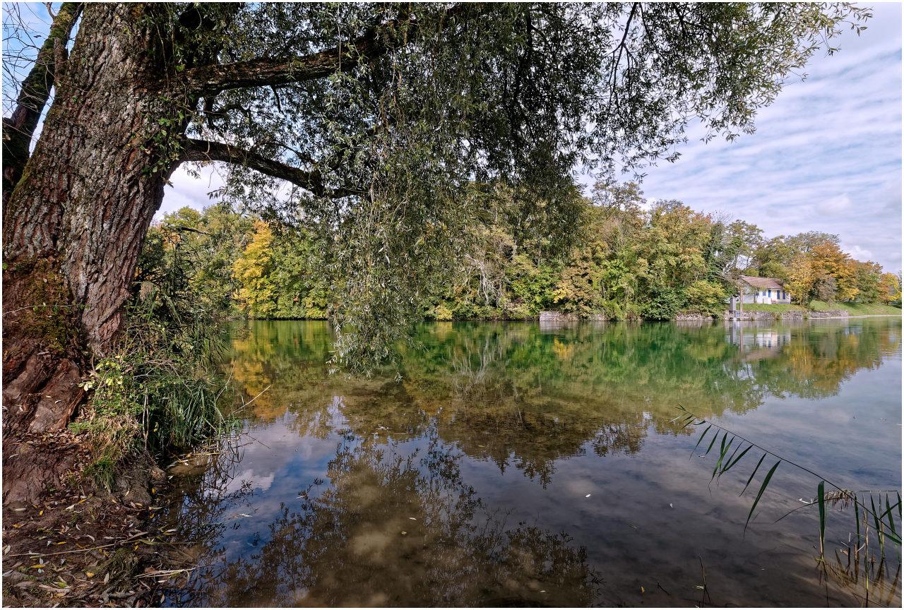 Das Aareufer am Schachenwald bei Erlinsbach