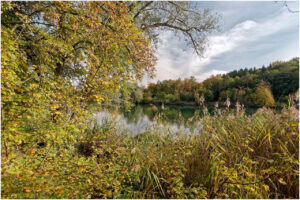 Reiche Pflanzenwelt bei der Brücke in Biberstein