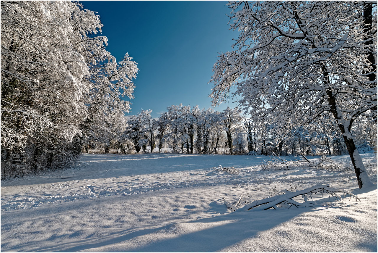 Winterwald in Rohr