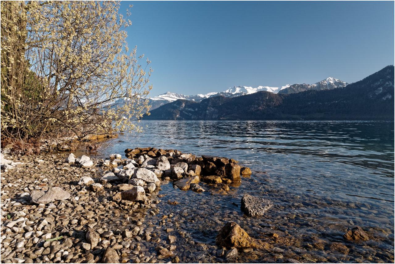 Eine schöne Stelle am Ufer bei Hertenstein