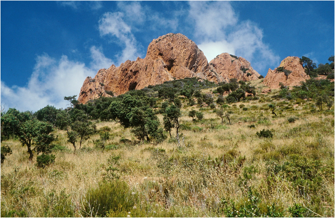 Eine Szene wie aus Afrika: Im Massif de l'Esterel