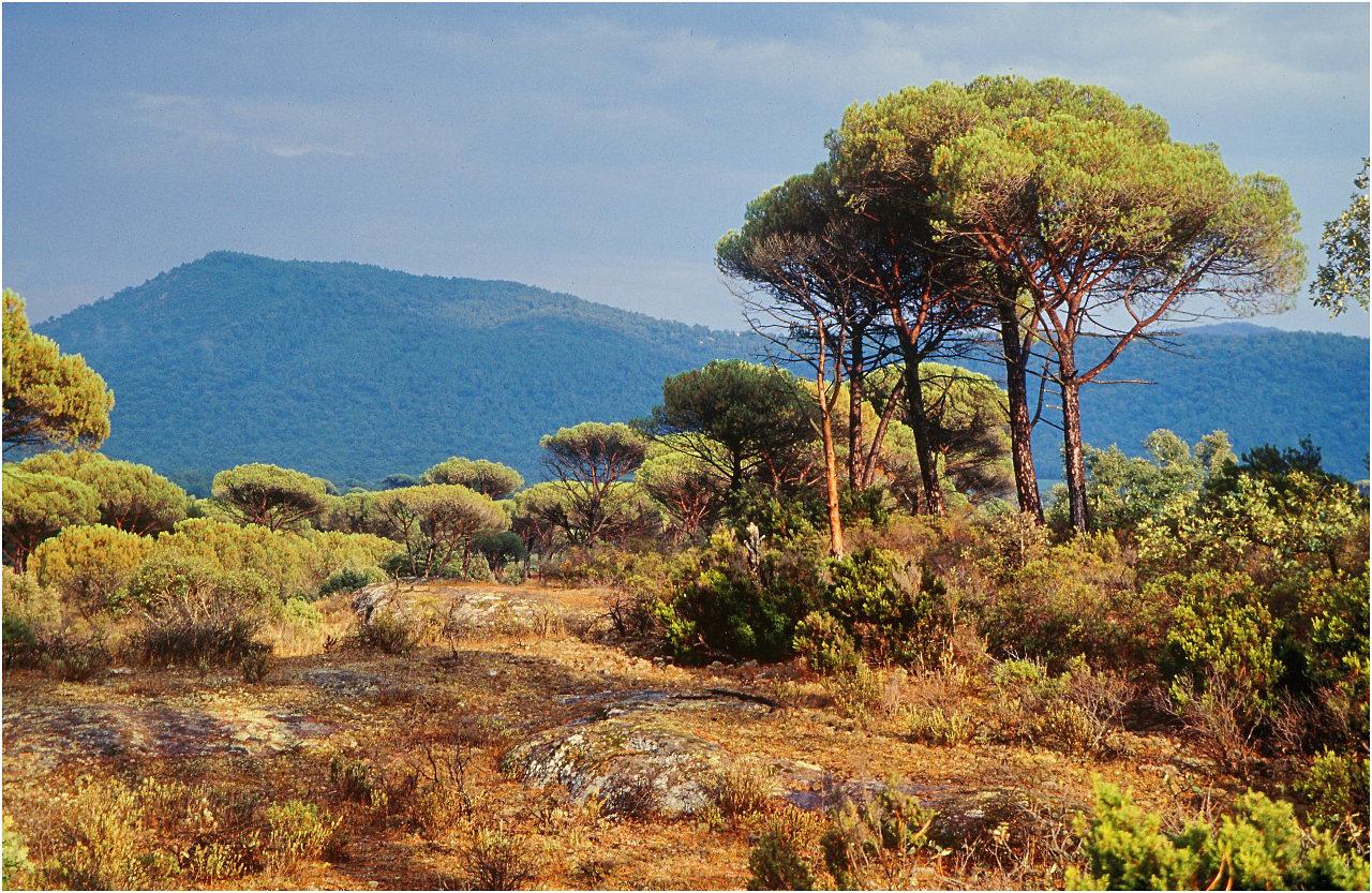 Landschaft im Vallon de Saint-Daumas bei Saint-Tropez