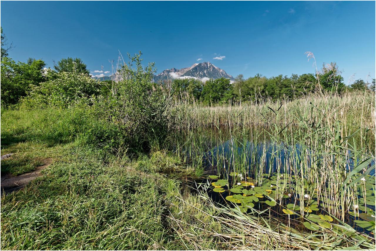 Im Naturschutzgebiet Les Grangettes bei Villenueve
