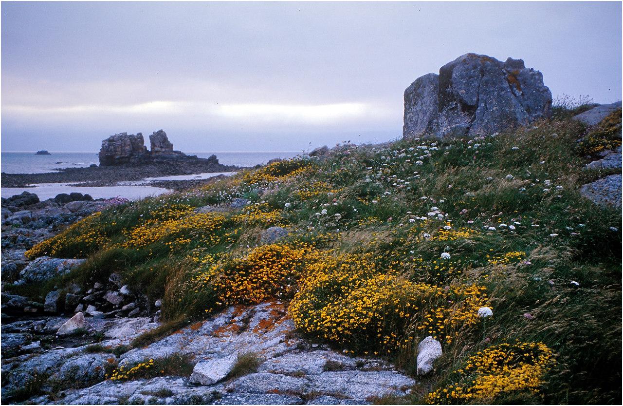 Auf der Île des Femmes, die bei Ebbe zu Fuss von Port Blanc aus erreichbar ist