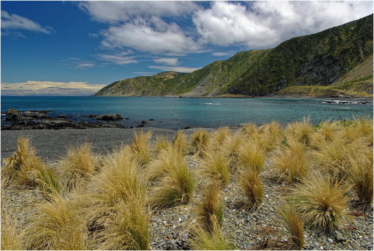 Tussock Grass-Büschel an der Owhiro Bay